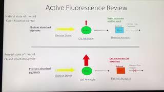 AquaFlash: What is Active Fluorescence