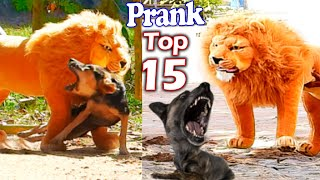 Best Prank Collection Top 15 - Fake Lion Prank Real Dog Super Funny - Try Not To Laugh Challenge