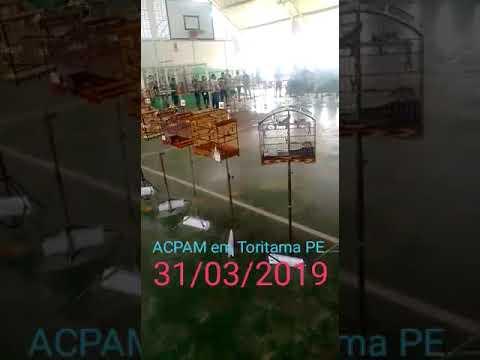 Torneio de Azulão, Papa capim e coleiro e trinta ferro em Toritama PE,8 Etapa da copa do interiACPAM