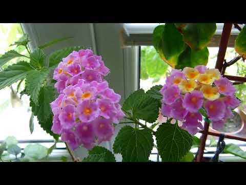 #Красивоцветущие комнатные растения круглый год для дома, квартиры, офиса.
