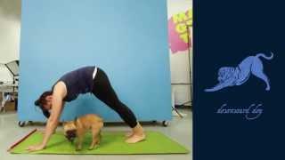 Threadless Staff recreates Animal Yogis by Kelly Larson