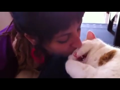 Cat Meows When Kissed