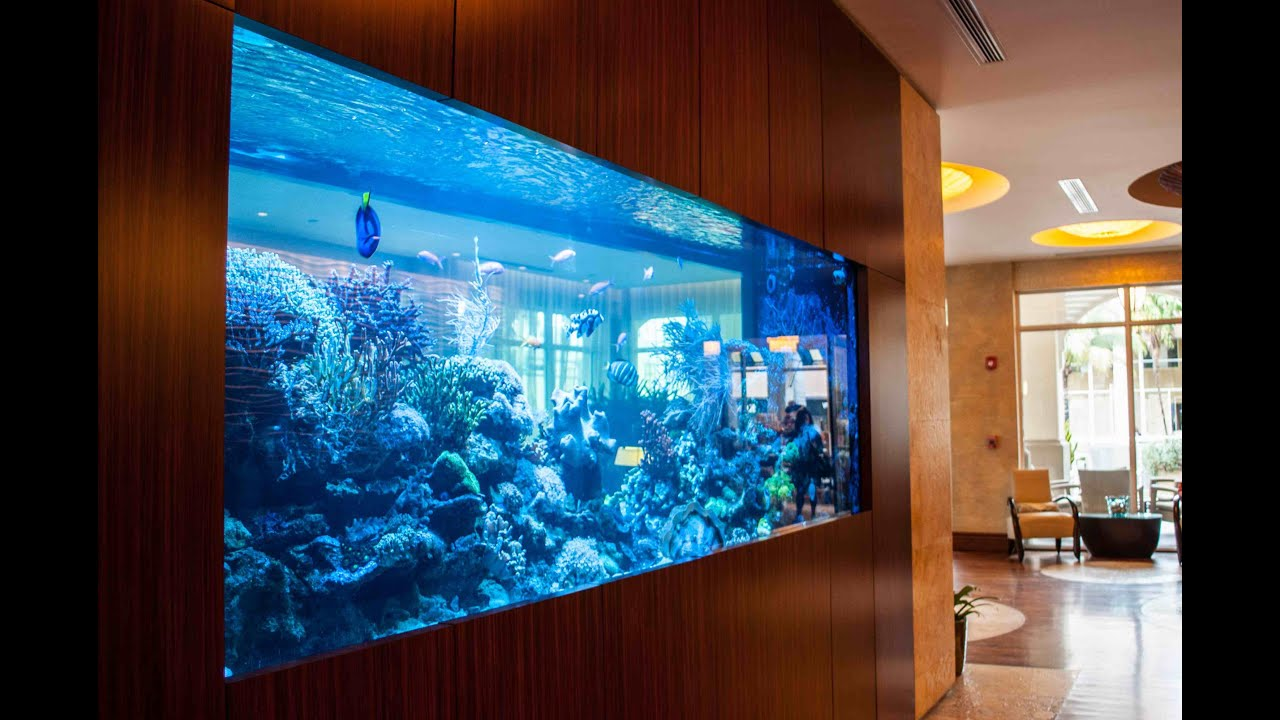 30 unbelievable fish tanks that makes you wish you were a for Fish tank youtube