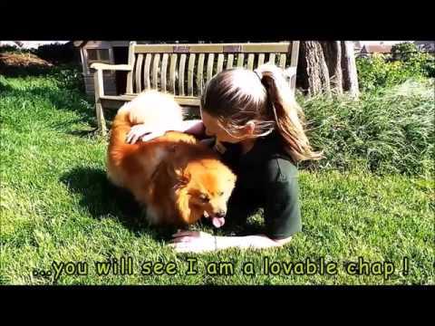 Dogs Trust Shoreham - Red Ted