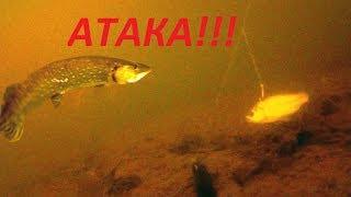 Щука на живца. Атака щуки! Зимняя рыбалка 2018. Pike attack