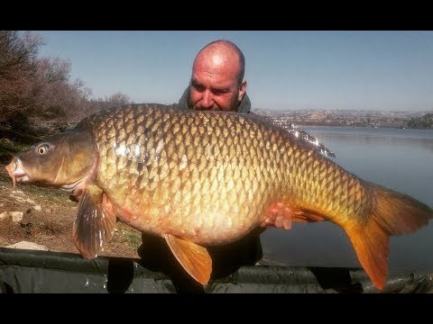 45lb Wild Ebro Common. Carp & Cat Fishing On The River Ebro With Nick Shattock
