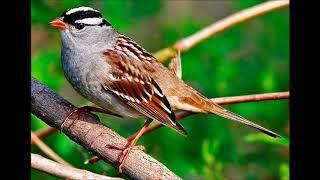 Pour les oiseaux Claude Sirois