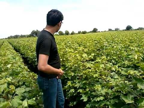 Indian hindi song farms moscow