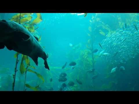 Monterrey Aquarium swarming school of fish
