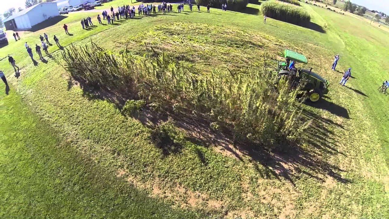 Kentucky Hemp Harvest