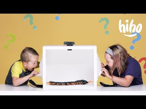 Kids Guess What's in the Box! | Episode 2 | HiHo Kids