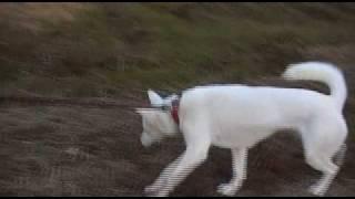 紀州犬との散歩映像です。