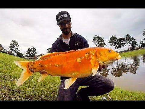 FISHING FOR HUGE KOI USING ULTRALIGHT GEAR!