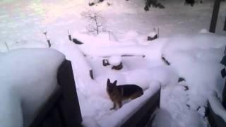 Romeo snow