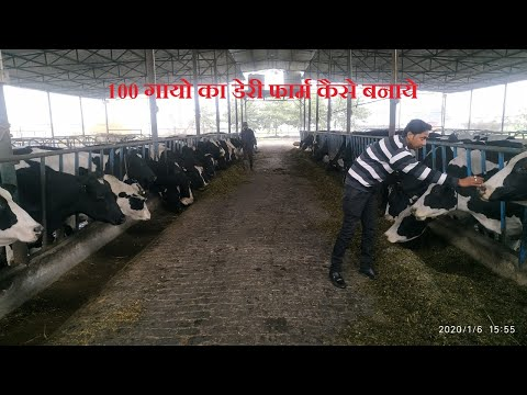 How To Start a Successful Dairy Farm