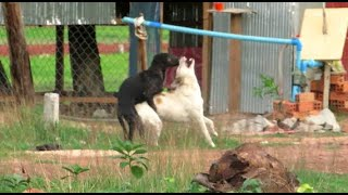 All Animal Breeds!! Best Dog Breeds 2018  Sweet Dogs Playing On Grass