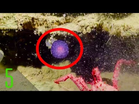5 Most Mysterious Deep Sea Discoveries