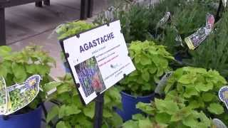 What plants to use for a bees and butterflies garden - Chagrin Valley Soap Earthday initiative 2015