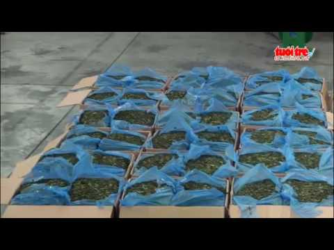 Khat smuggling an alarming problem in vietnam