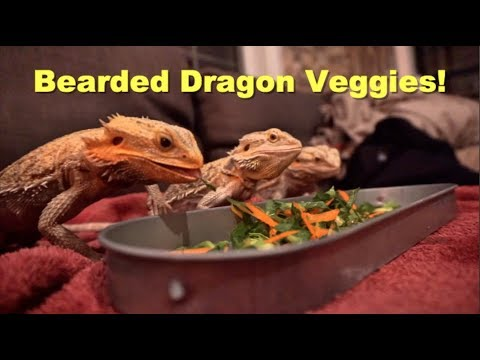 What Veggies I Feed My Bearded Dragon !!   Daily Reptile Routine