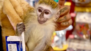 buying-my-baby-monkey-everything-he-touches