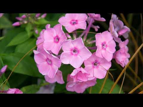 Цветы, которые нужно посеять на рассаду в марте и апреле.