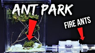 fire-ants-react-to-their-new-ant-park
