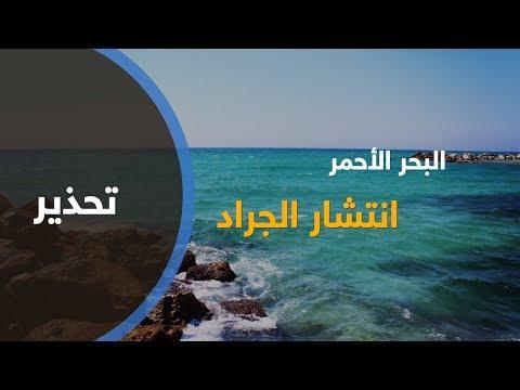 تحذير من انتشار للجراد في البحر الأحمر  - نشر قبل 22 دقيقة