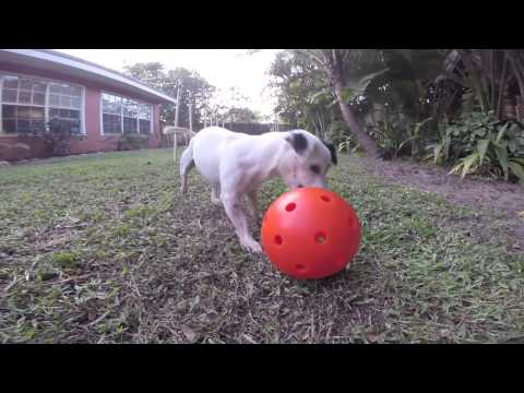 unbreakoball-–-the-invincible-dog-toy
