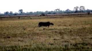 В мире животных. Африка.