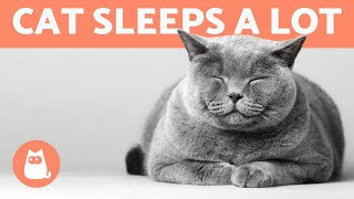 Why Does My CAT SLEEP All the Time? 🐱💤 Is It NORMAL?