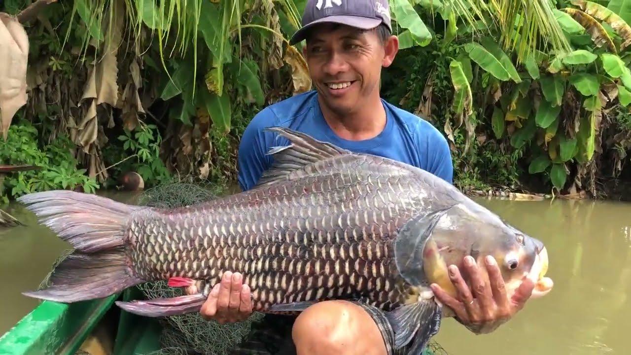 Kinh hoàng cảnh chài bắt cá khủng 40KG cực hiếm ở Miền Tây