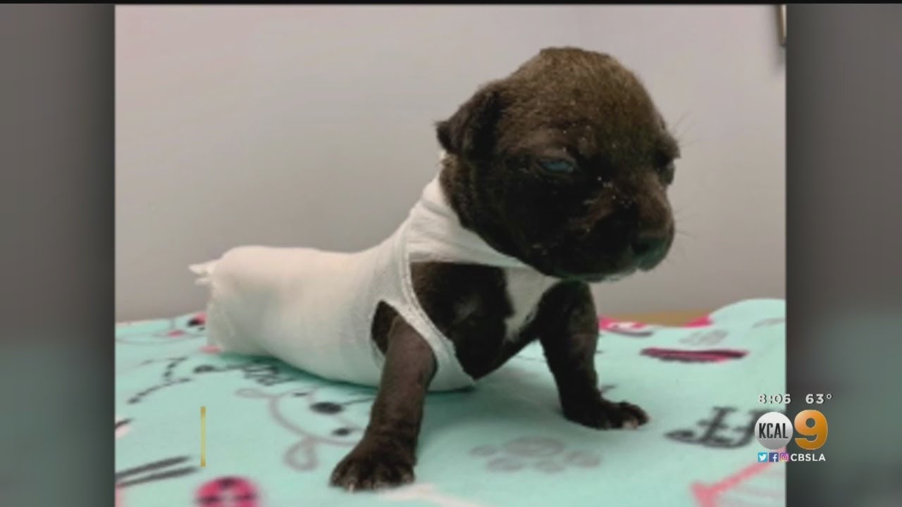 COACHELLA, CALIFORNIA, 3 WEEK OLD PUPPY BURNED AND DUMPED