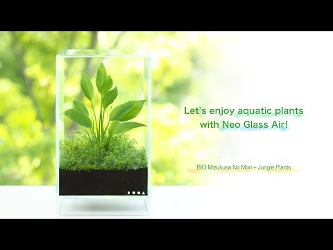 [ADAview] Let's enjoy aquatic plants with Neo Glass Air!