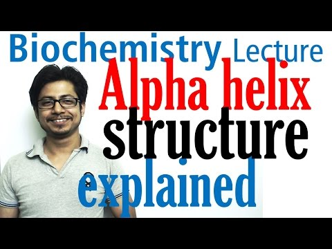 Alpha helix | Secondary structure of proteins