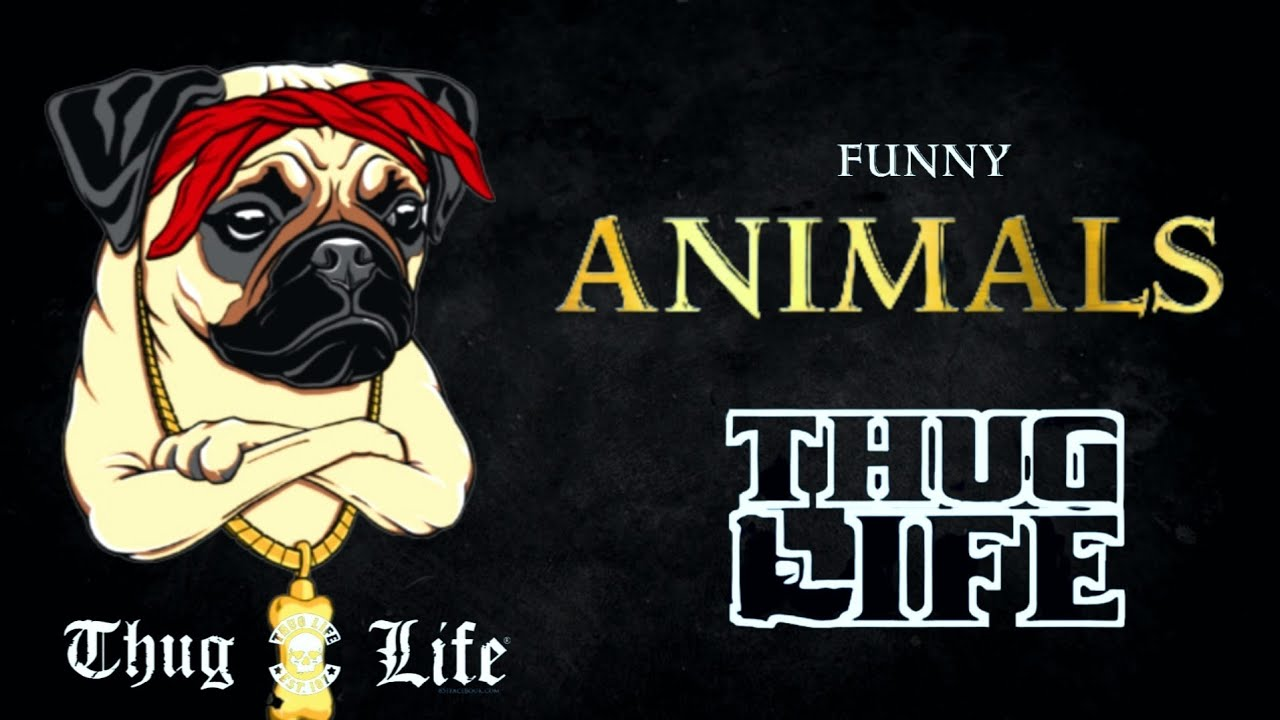 Animals Thug Life | Funny Animals Videos | Viral Memes