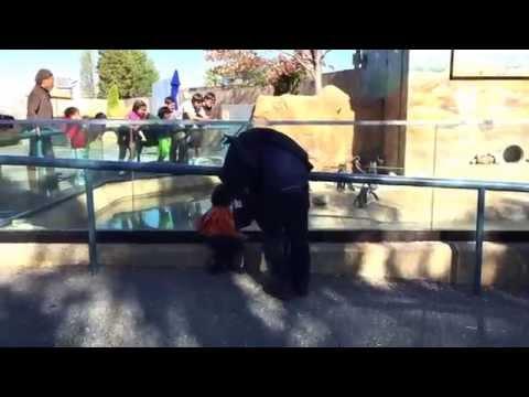 America's Most Touchable Aquarium, Family day at the aquarium was a total success!.