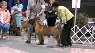 2011 Glba Specialty Class Dogs