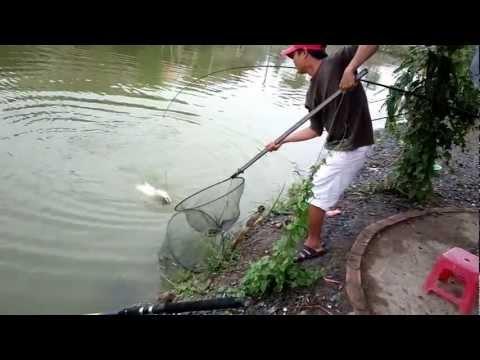 Câu cá giải trí..cá tra 5kg5