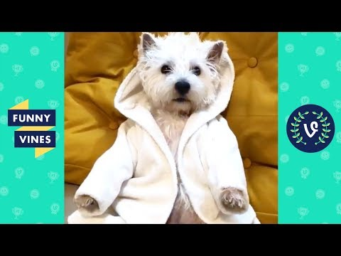 TRY NOT TO LAUGH – Funniest ANIMAL & PETS Compilation | Funny Vines August 2018