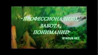 StatusVet   ветеринарная клиника в Харькове 1(, 2012-10-25T23:14:16.000Z)