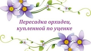 видео Пересаживать орхидею после покупки? Рекомендации