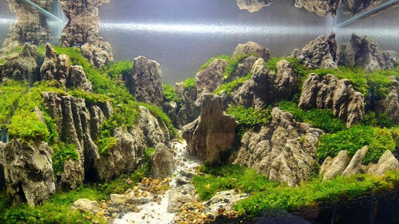 39 Aquascape Batu Pasir Youtube