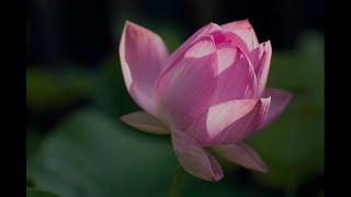Dharma in Music: Homage to Bodhisattva Guan Shi Yin