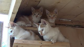 Building a house for kittens and cats