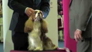 Miletree Contellation- #1 Cavalier King Charles Spaniel And Dog In Germany