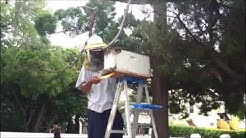 Bee Swarm Removal In Hamilton, June 23 2016