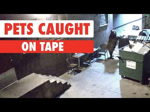 Pets Caught On Tape