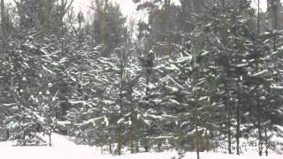 Relaxing nature scenes & chinese instrumental music - In The Forest In Winter Season IV