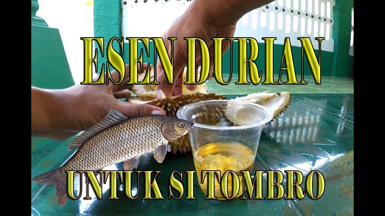 Cara Membuat Essen Alami Durian Yang Super Ampuh Youtube